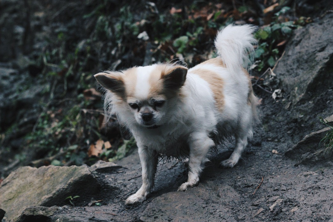 Cute Hiking Dog, Alex Gaboury